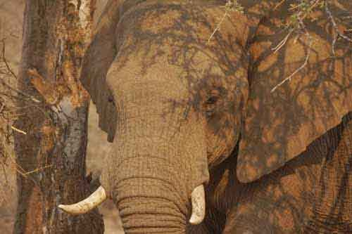 A Beautiful African Elephant Photo and Why I Won't be Painting It - by Artist Alison Nicholls