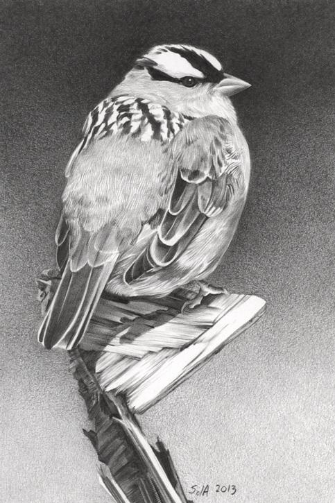 Scrap Pile Sparrow web