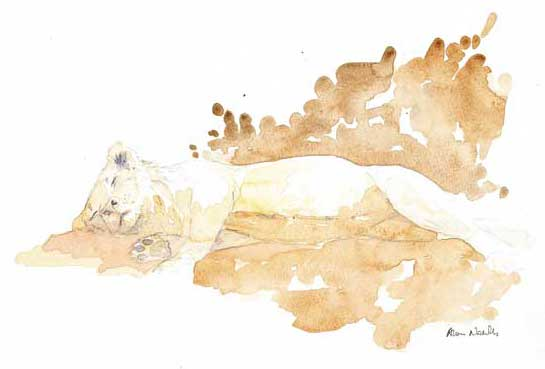 Young Male Lion Seeks Good Home by Alison Nicholls