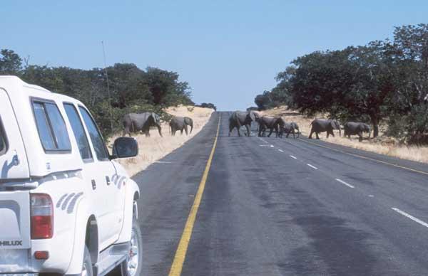Elephants near Kasane, Botswana (photo by Alison Nicholls)