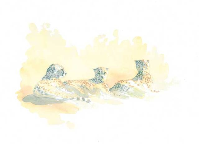Cheetah Trio Field Sketch by Alison Nicholls Purchased by Bennington Center for the Arts