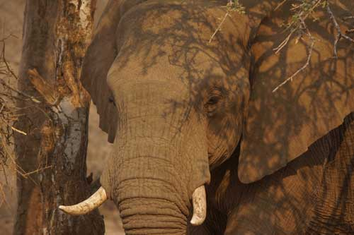 Elephants Avoid Busy Nights at the Local Bar - an Update on Wildlife Corridors in Northern Botswana