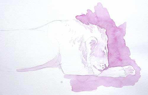 Lion Field Sketch by Alison Nicholls ©2013