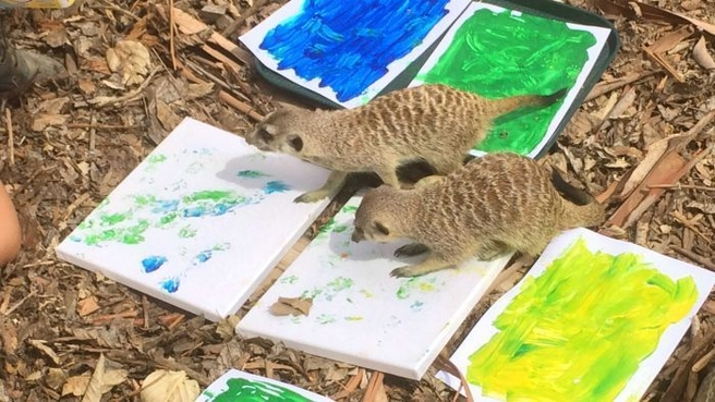 Meerkat Paintings