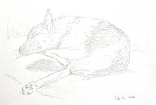 Chase, sleeping through the Superbowl, by Alison NIcholls