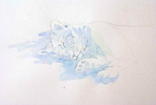 """Leopard Field Sketch, 11x14"""" by Alison Nicholls © 2013"""