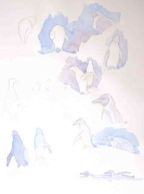 Penguins Field Sketch by Alison Nicholls