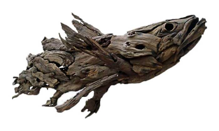Coelacanth by Tony Fredriksson