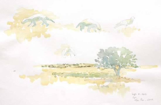 Kalahari Honey Badgers Field Sketch by Alison Nicholls ©2012