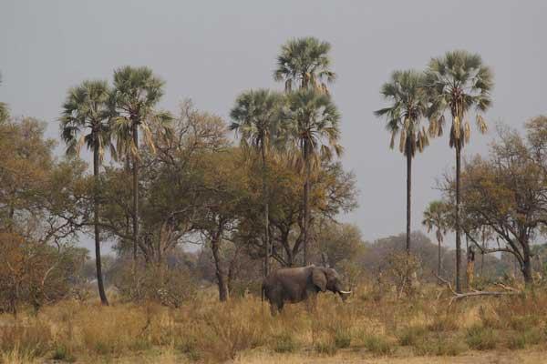 Okavango Delta, Botswana, photo by Nigel Nicholls