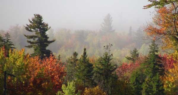 Fall foliage by Alison Nicholls